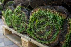 Grame o grama nos rolos prontos para ser usado jardinando ou ajardinando Foto de Stock Royalty Free