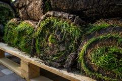 Grame o grama nos rolos prontos para ser usado jardinando ou ajardinando Fotos de Stock
