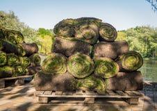 Grame o grama nos rolos prontos para ser usado jardinando ou ajardinando Fotografia de Stock