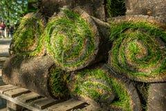 Grame o grama nos rolos prontos para ser usado jardinando ou ajardinando Imagens de Stock