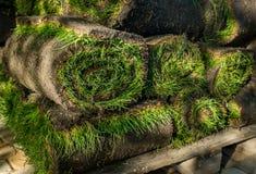 Grame o grama nos rolos prontos para ser usado jardinando ou ajardinando Imagem de Stock
