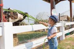 Graminée fourragère de bébé nouveau-né mignon asiatique pour l'iin de vache la ferme Images stock