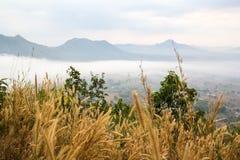 Gramineae grass on Phu Tok Royalty Free Stock Image
