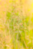 Gramineae Herbs in the Meadow. Gramineae herbs moved by the wind in a meadow  under the warm spring sun Stock Photo