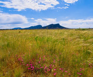 The grampians mountain range in victoria Stock Images