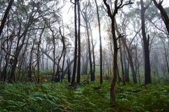 Grampians park narodowy Obraz Royalty Free