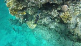 Grampo subaquático bonito vídeos de arquivo