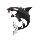 Grampus or orca, jumping killer whale. Orca or killer whale, grampus fish symbol. Marine or nautical mammal, big underwater animal and creature with teeth Royalty Free Stock Photos