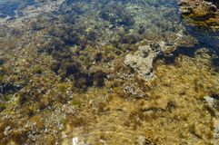 Gramvousa view underwater. One of the most beautiful island s from the world , Greece Gramvousa, water is clear like crystal, underwater life Stock Photo