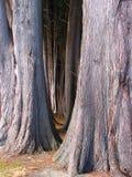 Gran árbol Imagen de archivo libre de regalías