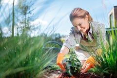 Gran amante de la horticultura que siente asombroso mientras que planta florece fotografía de archivo