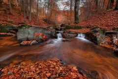 Gran Autumn Forest Landscape In Orange Color con cala hermosa y Misty Forest Enchanted Autumn Beech Forest con Fallin rojo imagenes de archivo