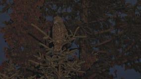 Gran buho de cuernos en un árbol almacen de metraje de vídeo