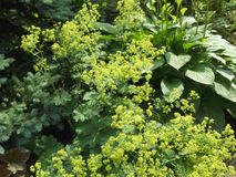 Gran, buske och lös-växande örter - en kombination, i att landskap Arkivbilder