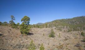 Gran Canaria, ноябрь Стоковая Фотография RF