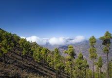 Gran Canaria, ноябрь Стоковые Фото
