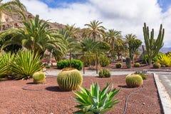 Тропическая фауна острова Gran Canaria Стоковые Изображения