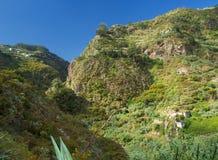 Gran Canaria, Azuaje Royalty Free Stock Photography