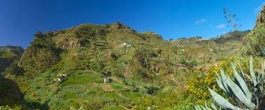 Gran Canaria, Azuaje Stock Photography