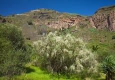 Gran Canaria, Caldera de Bandama arkivfoton