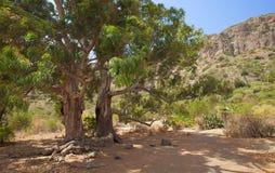 Gran Canaria, Caldera de Bandama, abandoned farm Stock Image