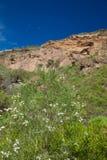 Gran Canaria, Caldera de Bandama efter vinter regnar arkivbilder