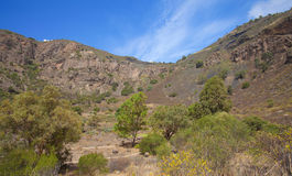 Gran Canaria, Caldera de Bandama Royalty Free Stock Images