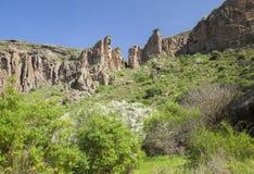 Gran Canaria, Caldera de Bandama, retama royaltyfri foto
