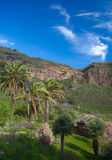 Gran Canaria, Caldera de Bandama after winter rains Royalty Free Stock Images