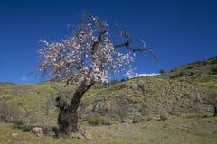 Gran Canaria, Caldera de Tejea, Januari royaltyfria bilder