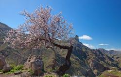Gran Canaria, Caldera de Tejeda arkivfoton