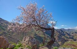 Gran Canaria, Caldera de Tejeda Royalty Free Stock Images