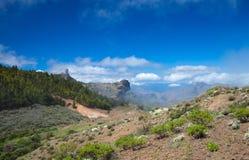 Gran Canaria, Caldera de Tejeda. Flowering plants in April stock photo