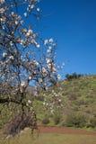 Gran Canaria, Caldera de Tejeda i Januari royaltyfri fotografi