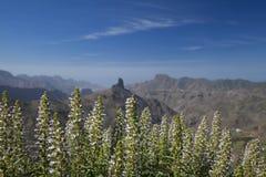 Gran Canaria, Caldera de Tejeda i Januari fotografering för bildbyråer