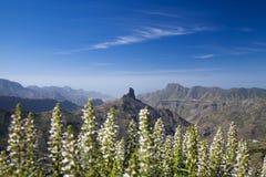 Gran Canaria, Caldera de Tejeda i Januari royaltyfri foto