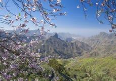 Gran Canaria, Caldera de Tejeda i Januari royaltyfria bilder