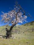 Gran Canaria, Caldera de Tejeda, Januari fotografering för bildbyråer