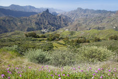 Gran Canaria, Caldera de Tejeda in January. Mallow bindweed flowers on foreground Stock Images
