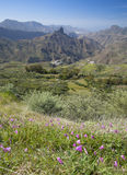 Gran Canaria, Caldera de Tejeda in January. Mallow bindweed flowers on foreground Stock Photo