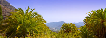Gran Canaria Canary Palm tree mountains Stock Photos