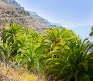 Gran Canaria Canary Palm tree mountains Royalty Free Stock Image