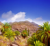 Gran Canaria Canary Palm tree mountains Royalty Free Stock Photography
