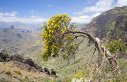 Gran Canaria, Central mountains Royalty Free Stock Photo