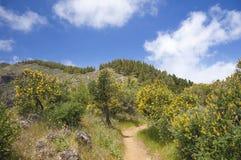 Gran Canaria, Central mountains Stock Photos