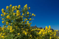 Gran Canaria, central regions, spring Stock Images