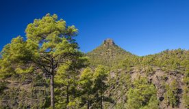 Gran Canaria, December royalty-vrije stock foto