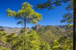Gran Canaria, December stock foto