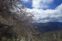 Gran Canaria, february 2018 Stock Photo