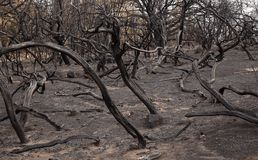Gran Canaria after forest fire. Gran Canaria, Las Cumbres, the highest areas of the island, after forest fire of september 2017 stock photos